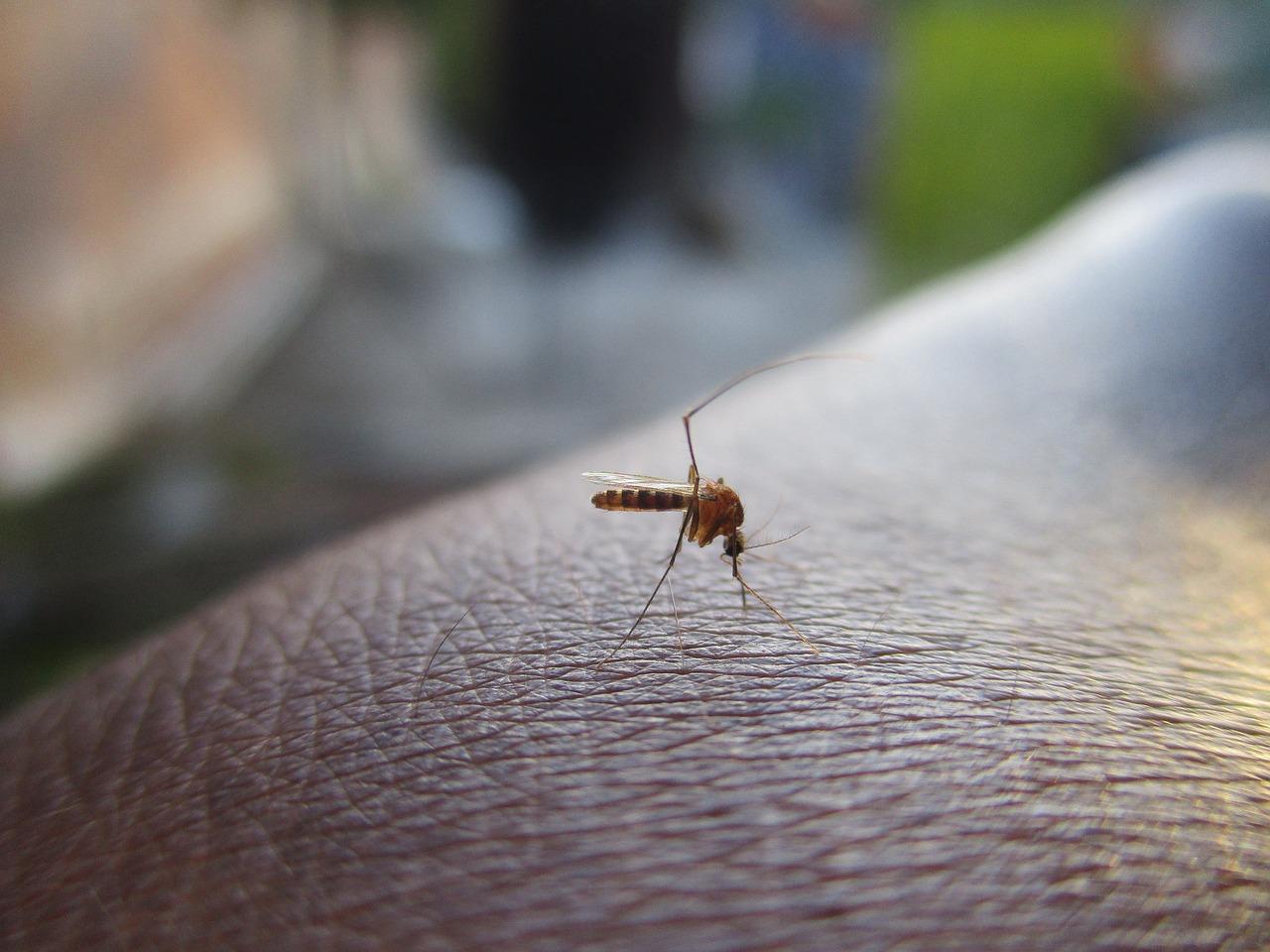 chikungunya au cambodge