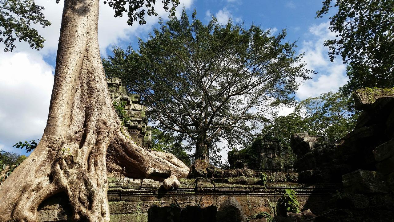 Ta Prohm au Cambodge