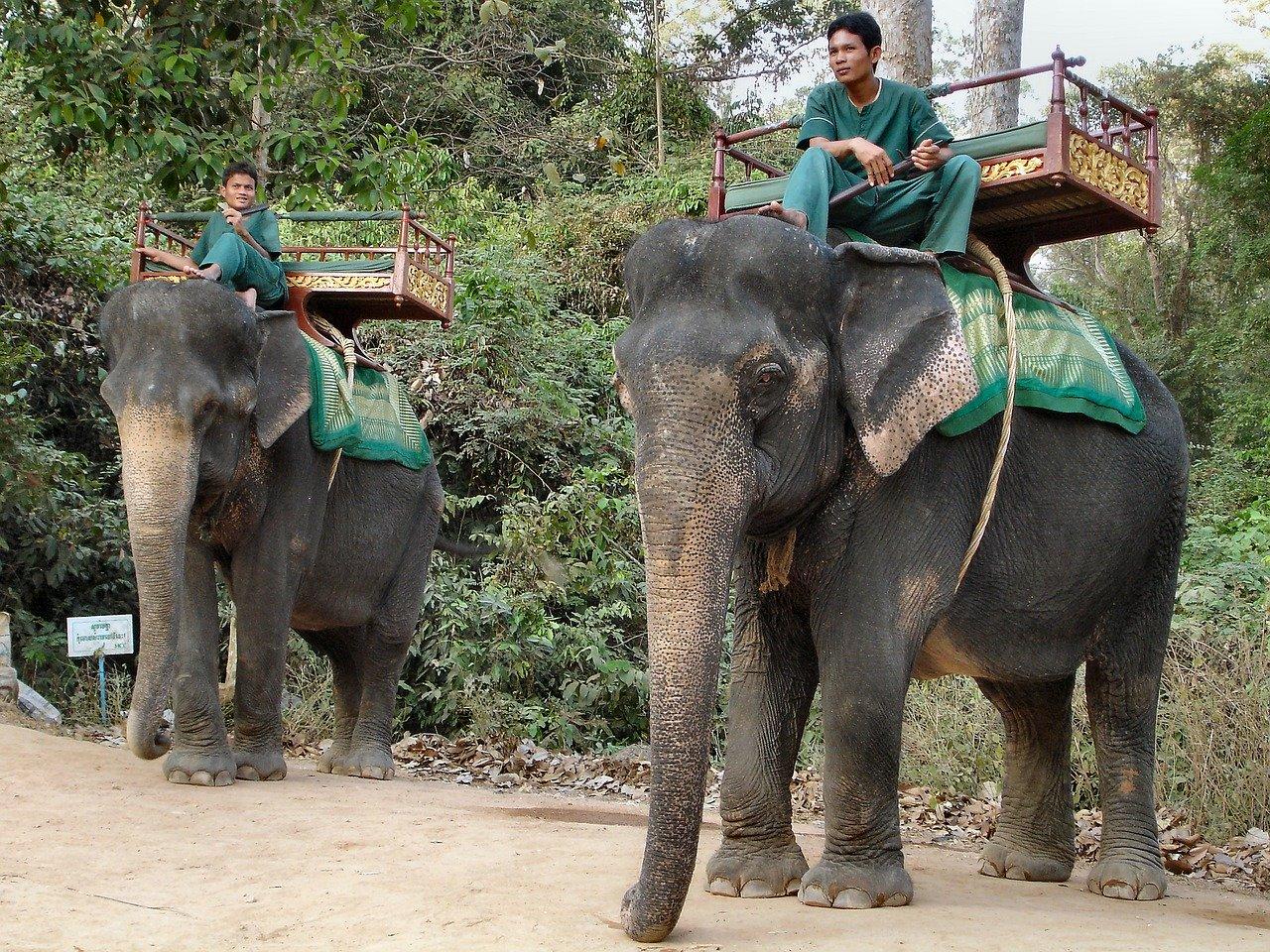 La-balade-à-dos-déléphant-enfin-interdite-au-Cambodge