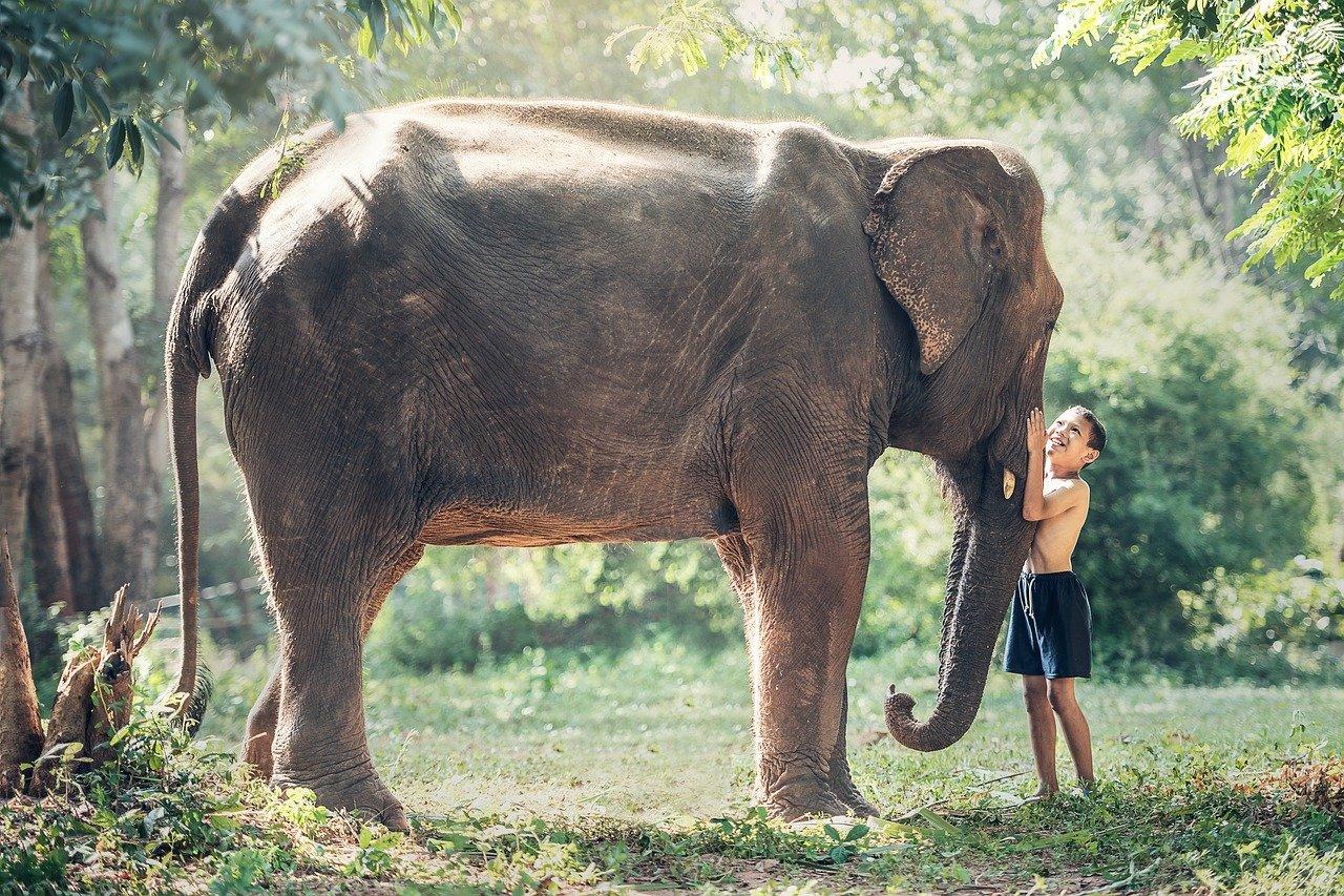 La-balade-à-dos-déléphant-enfin-interdite-au-Cambodge_2