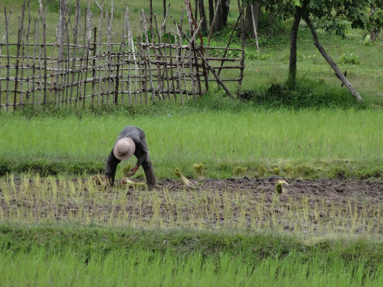 fete-du-sillon-cambodge